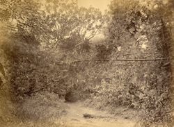 View of a path through a wood, Dhaka District